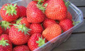 Fruitzon