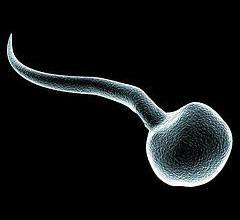 gezond afvallen na zwangerschap